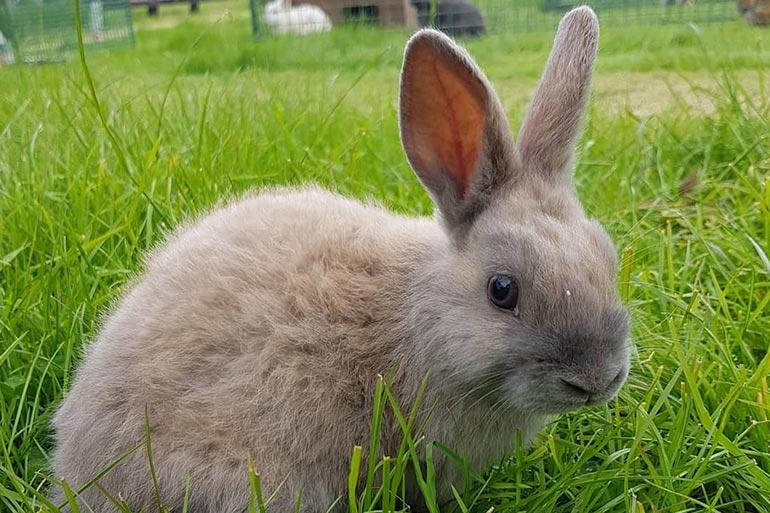 animal-grid-rabbit